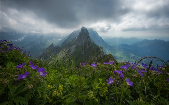 Wallpaper Switzerland, Appenzell Alps, flowers, mountains, clouds, fog