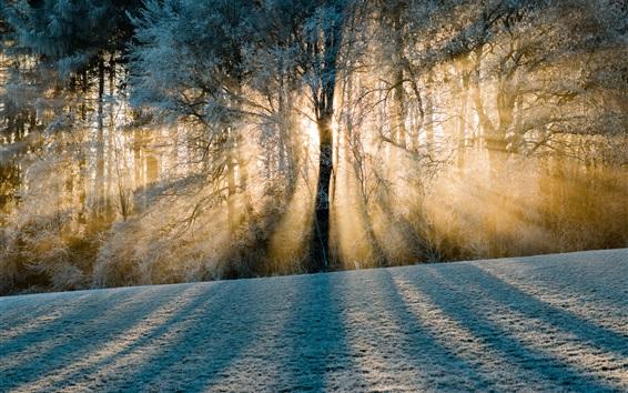 Papéis de Parede Suíça, sombras, floresta, árvores, neve, raios solares