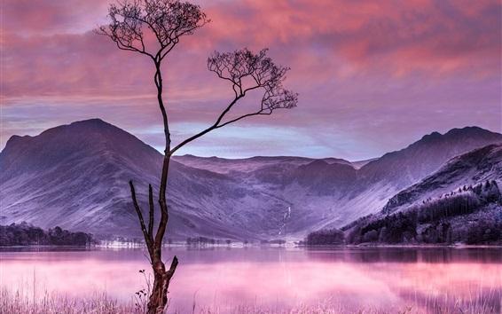 Wallpaper Tree, grass, lake, mountains, dusk