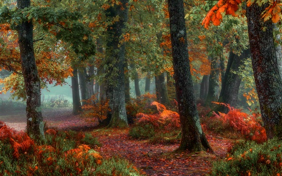 Wallpaper Trees, forest, autumn, ground, leaves