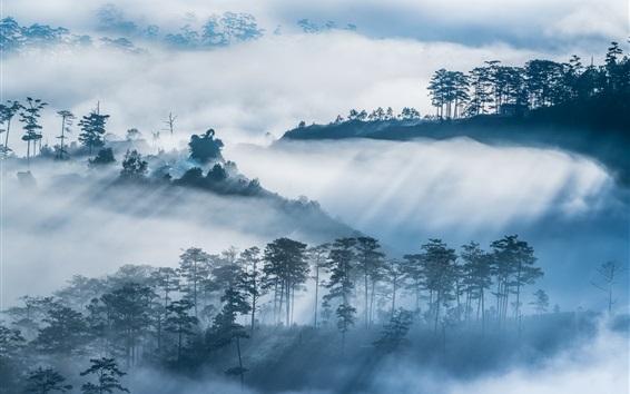 Papéis de Parede Árvores, montanhas, vila, nevoeiro, manhã