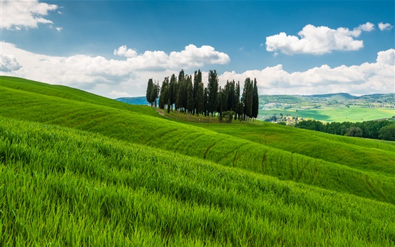 Wallpaper Tuscany, Italy, hills, trees, grass, fields, clouds