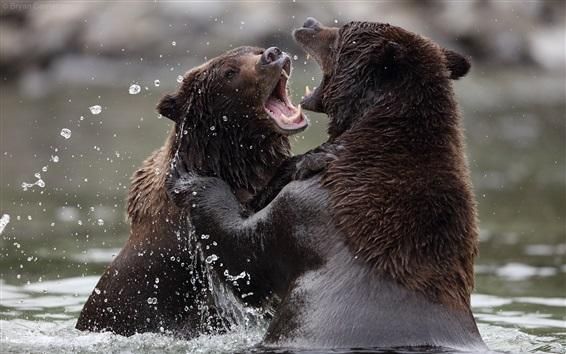 壁紙 水中で遊び心のある2頭のクマ