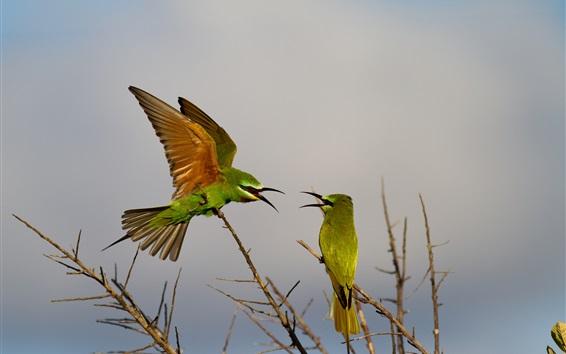 Papéis de Parede Dois pássaros, galhos