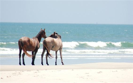 Papéis de Parede Dois cavalos, praia, mar