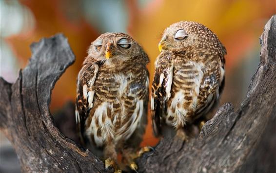 Fond d'écran Deux owl bed sleep