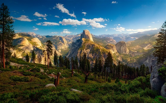 Wallpaper USA, Yosemite National Park, forest, trees, mountain, clouds