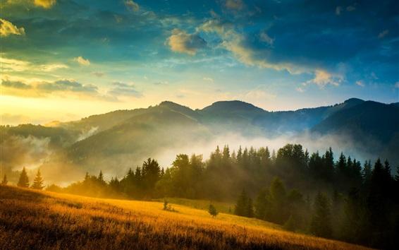 Обои Украина, Карпаты, лес, горы, туман, облака, солнце, утро