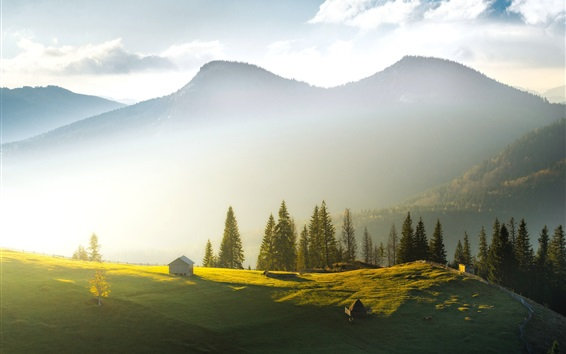 Fondos de pantalla Ucrania, Cárpatos, montañas, árboles, niebla, mañana