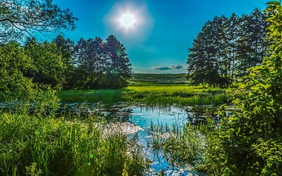 Fond d'écran Ukraine, Poltava, verts, été, roseaux, herbe, arbres, soleil, étang