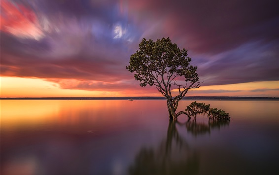 Fondos de pantalla Victoria, Australia, lago, árbol, puesta del sol, resplandor