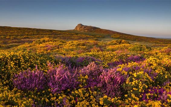 Wallpaper Wildflowers, hill, sky, England