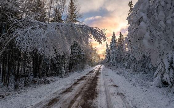 Обои Зима, деревья, дорога, снег