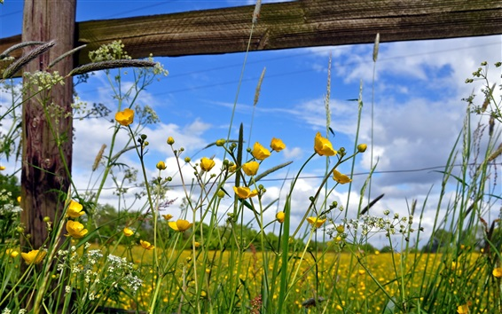 Обои Желтые полевые цветы, голубое небо