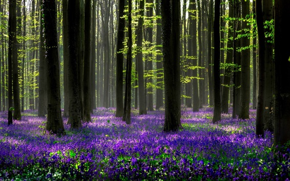 Wallpaper Beautiful forest, blue flowers