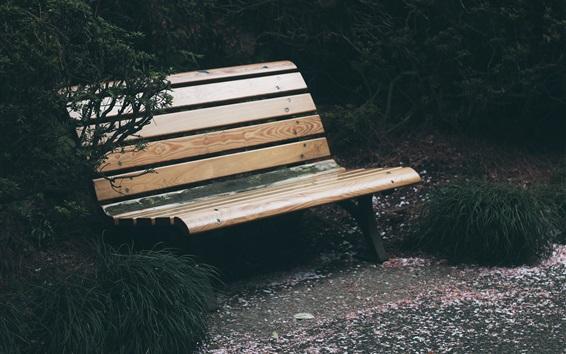 Обои Скамья, дерево, парк