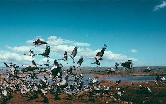 Papéis de Parede Voo de pássaros, guindastes