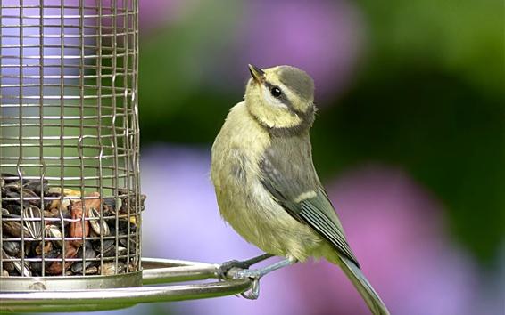 Wallpaper Bird look at birdcage