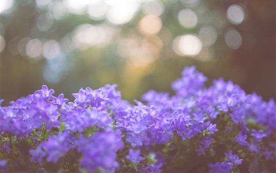 Обои Голубые цветы, блики