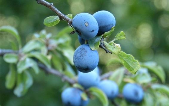 Wallpaper Blueberry, leaves, twigs
