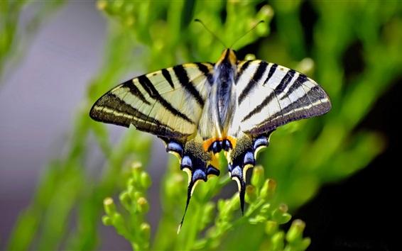 Wallpaper Butterfly, wings, blurry, green leaves