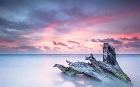 Papéis de Parede Caribe, mar, tronco de árvore morto, oceano, nascer do sol