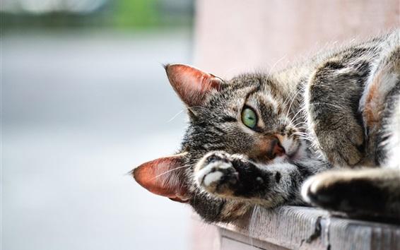 Wallpaper Cat sleep, paw
