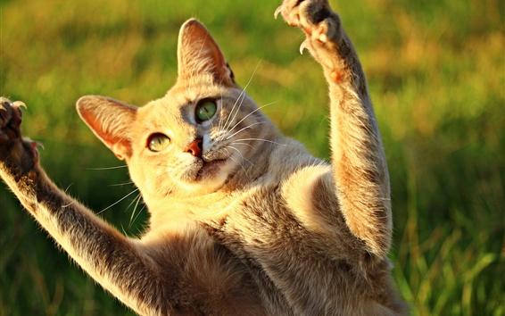 Обои Симпатичные подтяжки кошки поднимаются, солнце, забавные животные