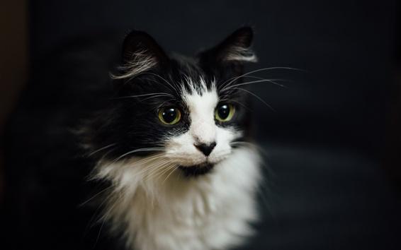 Обои Симпатичный котенок, пушистый, лицо, черный фон