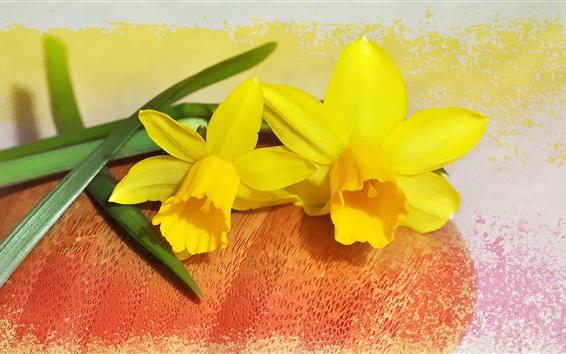Wallpaper Daffodil, yellow petals