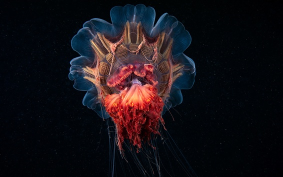 Wallpaper Darkness underwater, beautiful jellyfish, sea
