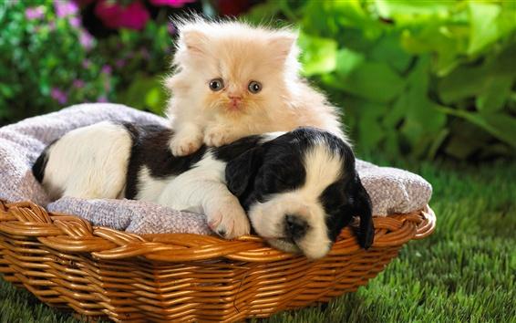 Fond d'écran Chien et chat, panier, amis