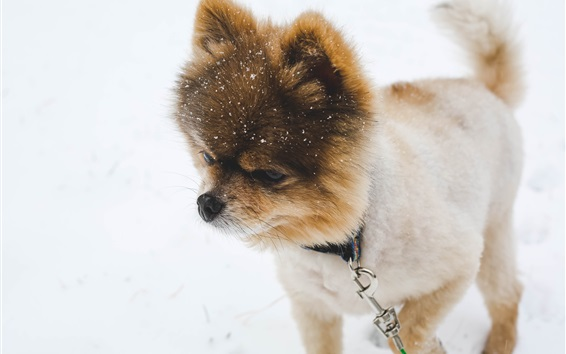 Wallpaper Dog in winter, snow