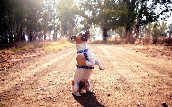 Wallpaper Dog standing, road, trees, sun rays