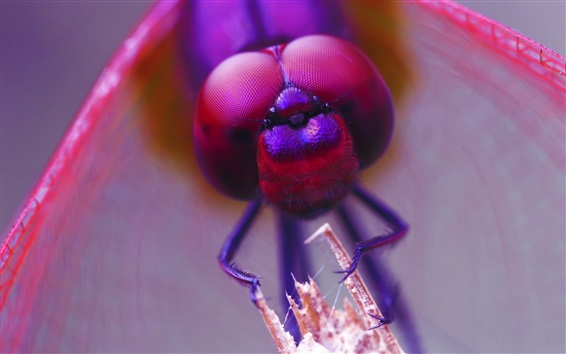 Wallpaper Dragonfly eyes macro photography