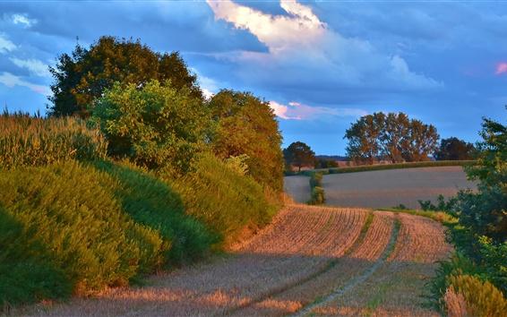 Wallpaper Farmland, field, trees, clouds, blue sky