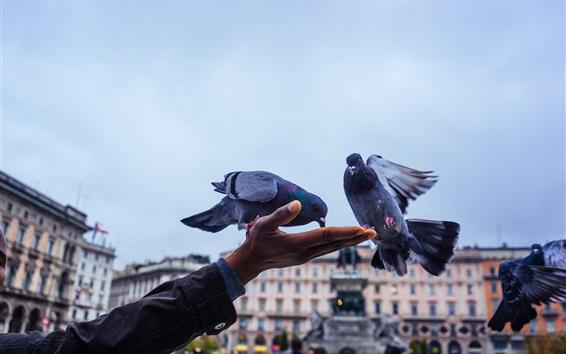 壁紙 鳩、手、都市