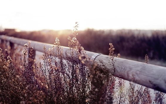 Wallpaper Fence, wildflowers