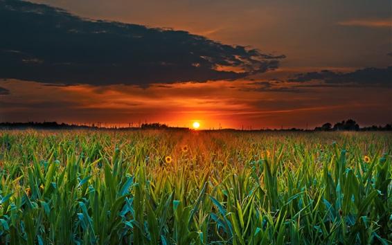Wallpaper Field, sunset, clouds, dusk