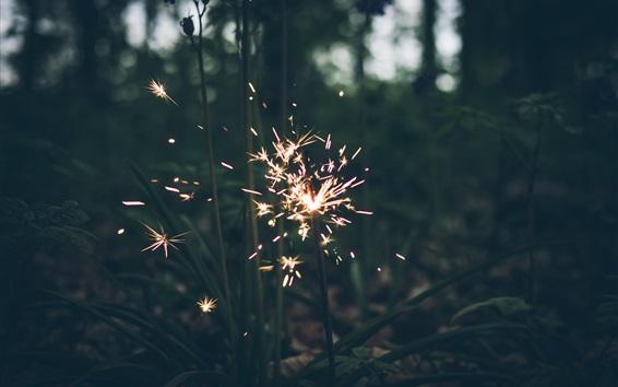 Wallpaper Fireworks, sparks, grass, night