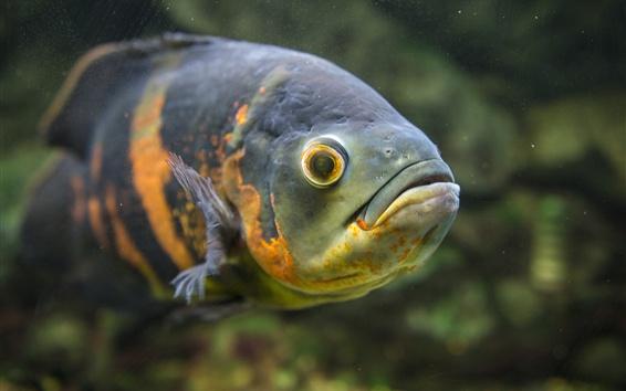 Wallpaper Fish, underwater