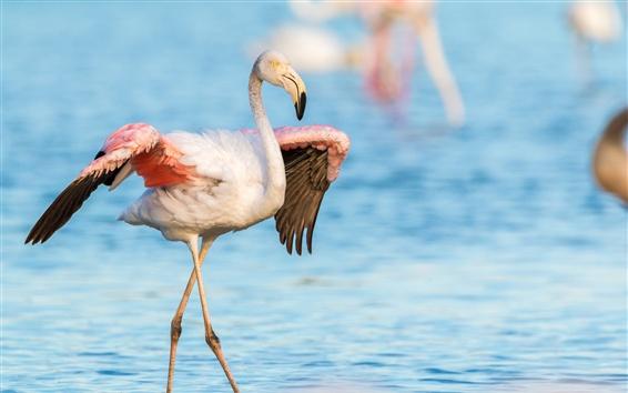 Papéis de Parede Flamingo, asas, lago, água