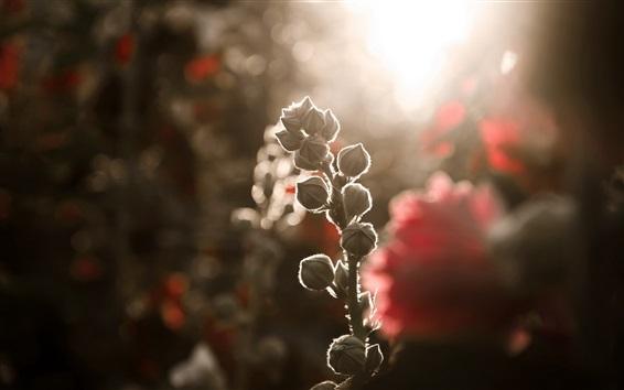Fond d'écran Bourgeons de fleurs, arrière-plan