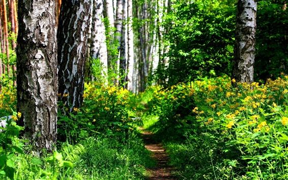 Papéis de Parede Floresta, arbustos, flores silvestres