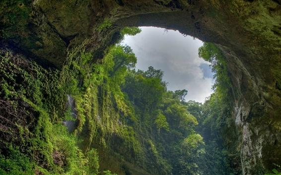배경 화면 숲, 동굴, 하늘, 나무