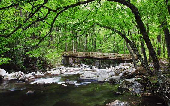 Wallpaper Forest, creek, stones, bridge, nature