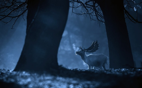 Wallpaper Forest, night, deer, cold