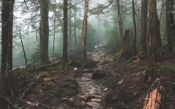 Wallpaper Forest, trees, creek, rocks, fog