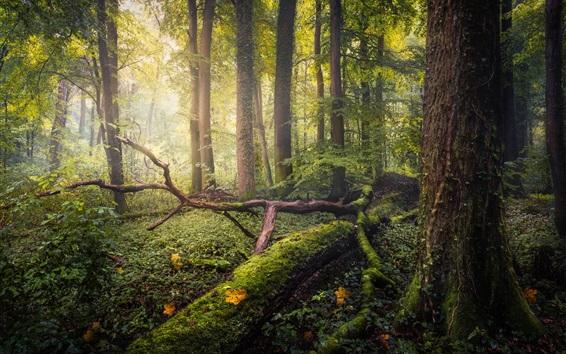 Fondos de pantalla Bosque, árboles, musgo, resplandor