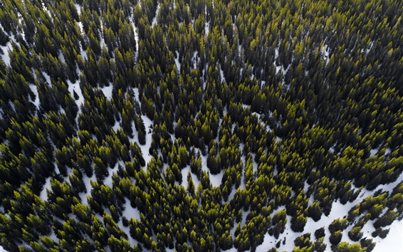 Wallpaper Forest, trees, snow, top view